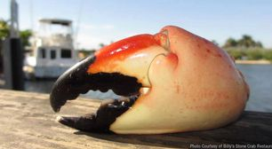 Best Stone Crab Claws in Miami